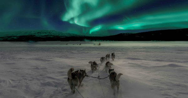 Everything about Eurail | Huskey riding with the beautiful Northern lights in Norway