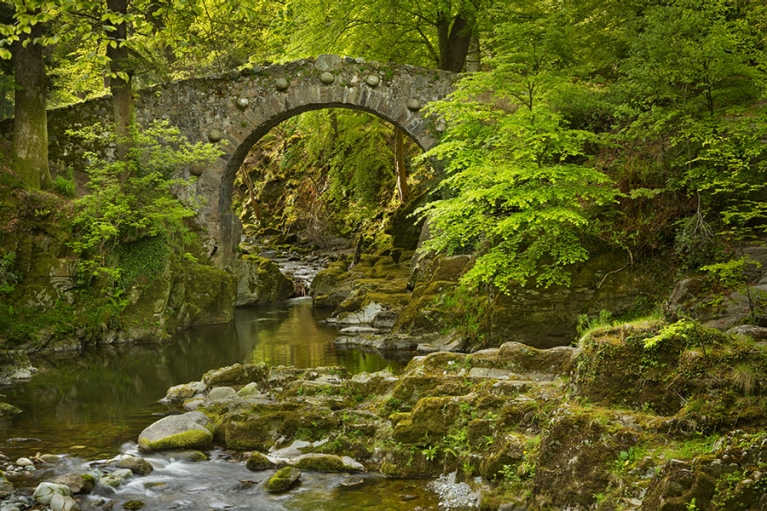 ireland-tollymore-forest-park-river-and-bridge